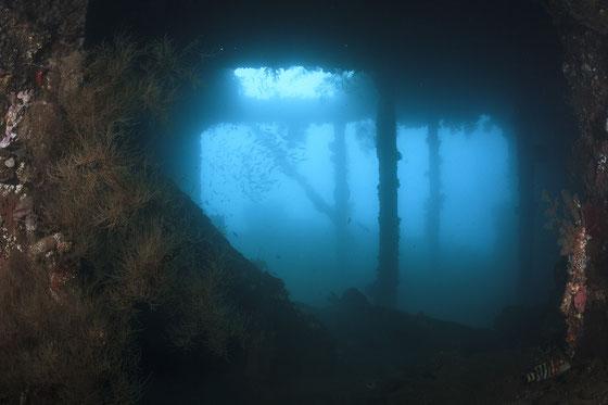 海底に眠る沈没船に訪問することが出来るのもダイバーの特権です。リバティ号
