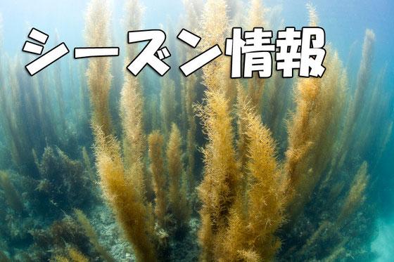 天草ダイビングのシーズン情報イメージ