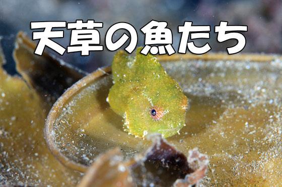 天草の魚図鑑 写真イメージ