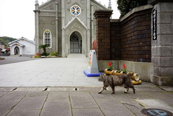 カトリック教会と猫