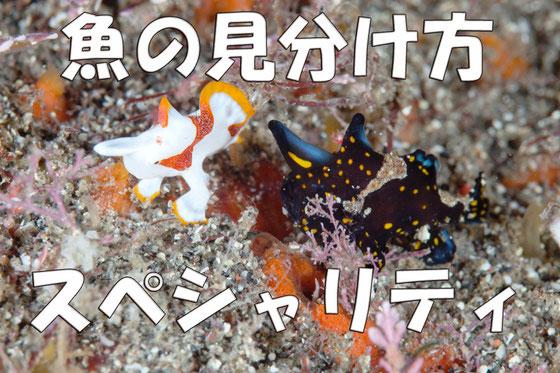 魚の種類や名前がわかるようになります。魚の見分け方スペシャリティ