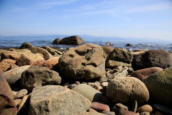 御所浦のトリゴニア貝の化石写真