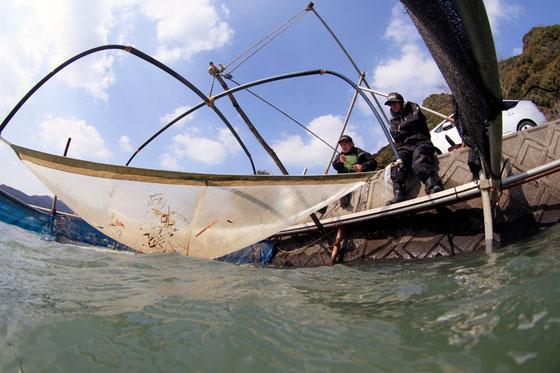 シラウオ漁 写真