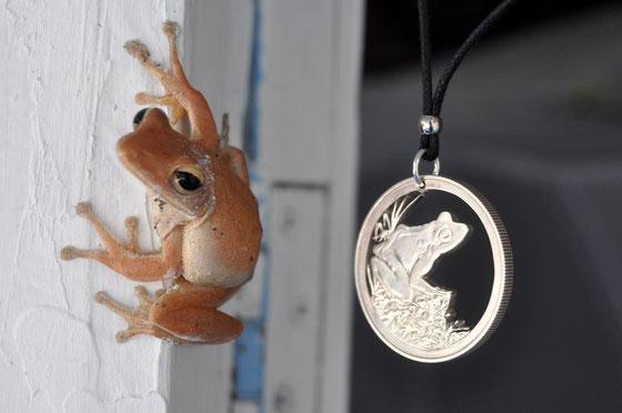 Münzsägewerk Katrin Thull | Fiji - Frosch