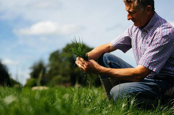 Lo standard grass fed traccia e verifica la percentuale di erba consumata dai bovini