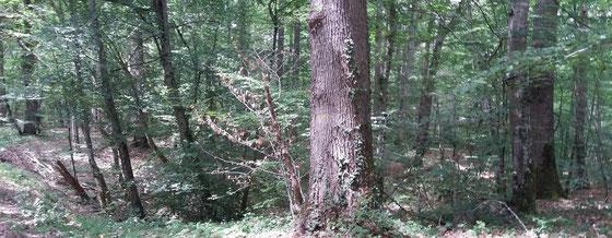Allier im Norden der Auvergne mit dem Wald von Troncais - Ralf Zindel