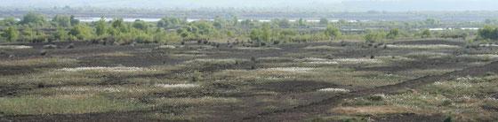 Die Torf Produktion in Irland befindet sich im Bog of Allen