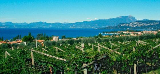 Garda-See Heimat des Bardolino