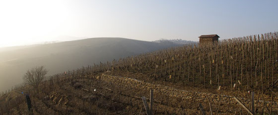 Vin Jaune - Gelber Wein aus der AOC Jura