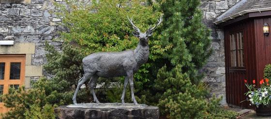 Glenfiddich - Tal des Hirsches