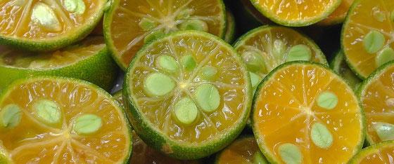 Kalamansi oder Moschus Limette ist die tropische Zutat des Ginies