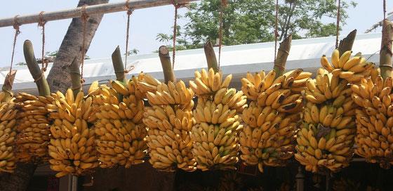 Bananen von Martinique - Ralf Zindel