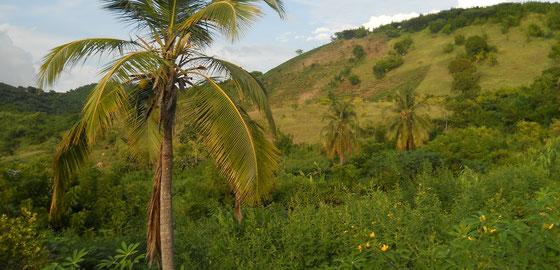 Haiti Probleme der Landwirtschaft