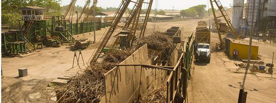 Zuckerrohrverarbeitung für Ron Flor de Caña - Photo: Ingenio San Antonio