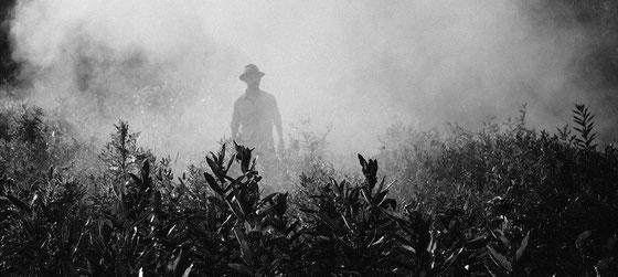Abbrennen von Zuckerrohrfeldern