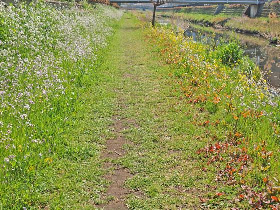 東京の春の小川にて時を刻む