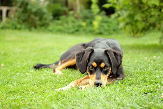 Hundeshooting - süß - momente-sammeln.de