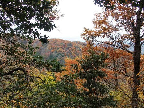 登り始めから真っ盛りの紅葉が出迎えてくれた
