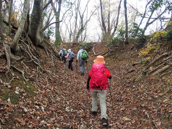 尾根に出てしばらく歩くと切通しです。                           落ち葉を踏みしめるやわらかい感触とともにサクサク感がかすかな音になって楽しめます。