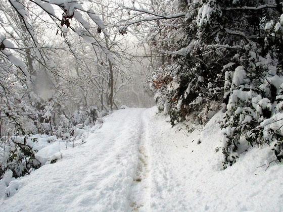 ちょっと陽射しが見えたが・・・すぐまた雪模様に戻った。