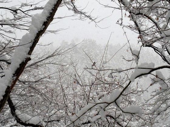 目の前の額縁から見る杉樹林の雪景色もいい!!