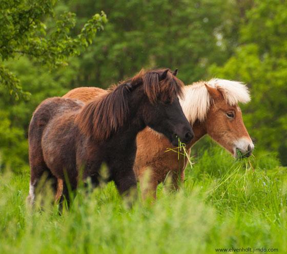 Therapie mit Pferden München, Islandpferdehof München, Bayern, Islandpferdezucht München, Norwegische Waldkatzenzucht in München, Kitten zu verkaufen
