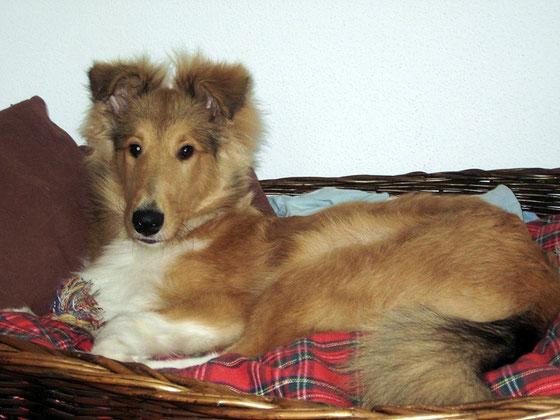 Lennox 5 Monate alt