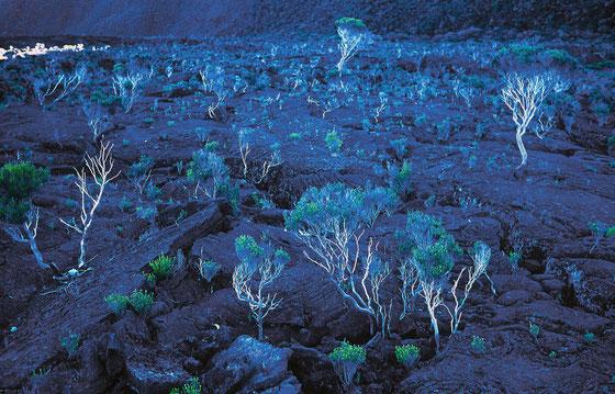 Réunion,l'ombre du volcan,au petit matin,Août 1999