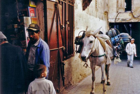 Fes,l'âne et l'enfant,Novembre 2008