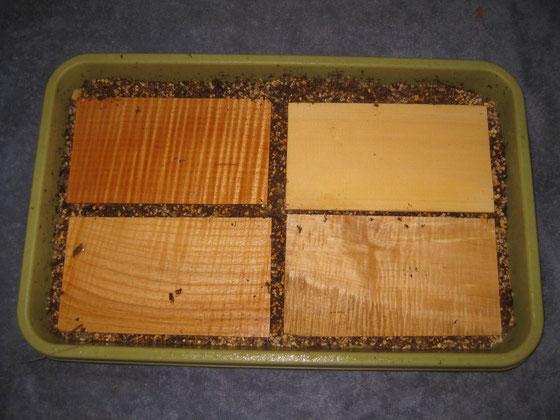 土を敷いたトレーに試験片を並べ、とある作業を少々。