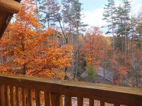 テラスから残紅葉を眺めるオレ