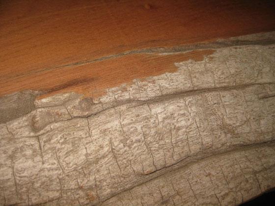 生々しい木肌