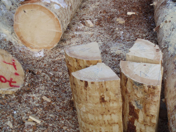 ヨーロッパの与作も木ぃを伐る。