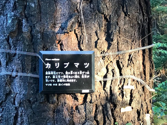 木肌がカリビアン。