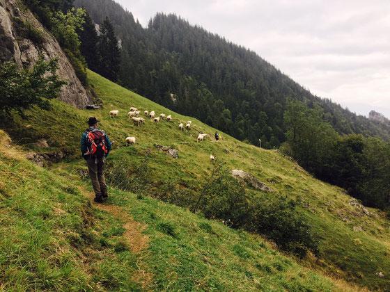 Mithilfe bei der Alpabfahrt. Understeigli im Herbst 2017