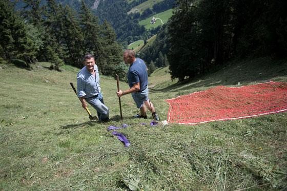 Bergheuen am Stanserhorn_Juli 2017 (Foto: Corinne Glanzmann, LZ)