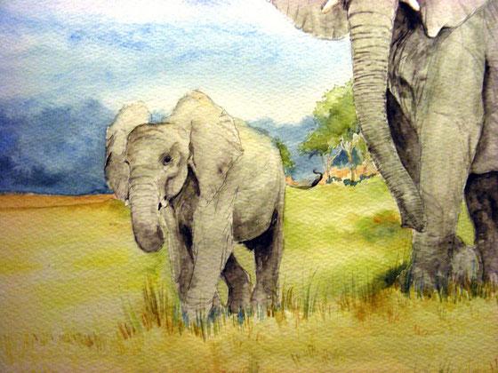 aquarelle elephant