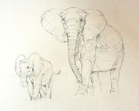elepahts crayon illustration naturaliste
