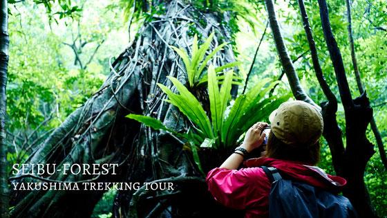 大川の滝へも行く、世界遺産の森、西部林道ツアー。9月のおすすめツアー