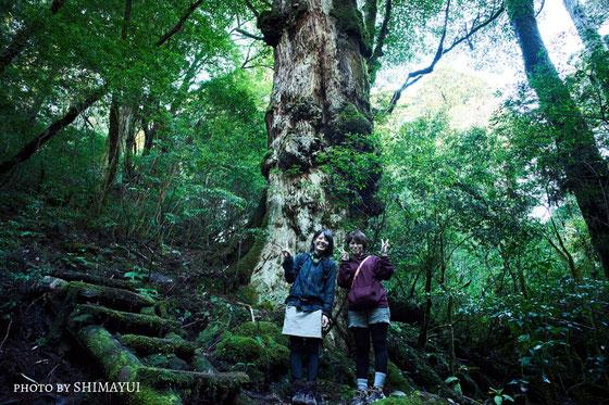 天文の森の先にある、釈迦杉(太忠岳ガイドツアーにて)