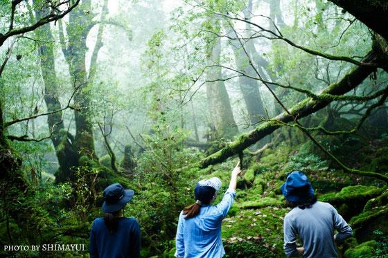 白谷雲水峡・もののけ姫の森で。一人旅,女性限定,おすすめガイド