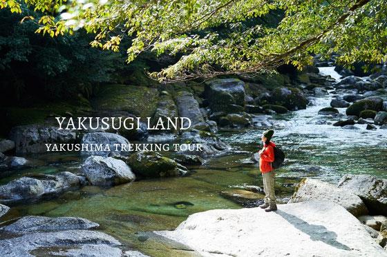 ガイドと屋久杉の森を味わう、ヤクスギランドツアー,屋久島ガイド,屋久島半日,屋久島,屋久島旅行,屋久島観光