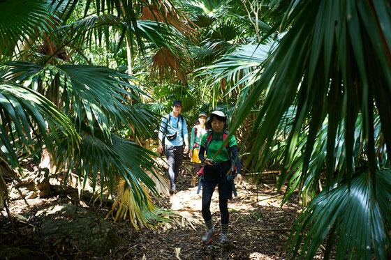 蛇の口滝トレッキングルート入口付近の森