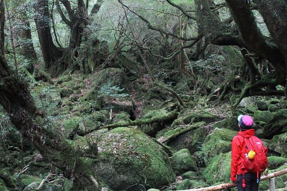 屋久島,もののけの森,白谷雲水峡,太鼓岩,ガイドツアー,女性一人旅,