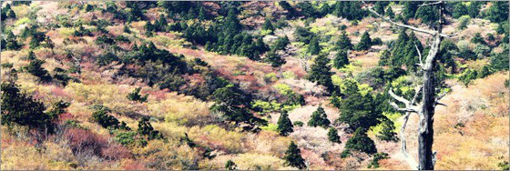 屋久島,お花見,トレッキング,登山,ヤマザクラ,屋久島3月,ガイドツアー,もののけの森,太鼓岩