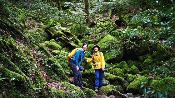 静かな森と渓流美も「奉行杉」コースの魅力