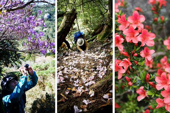 5月に見られる、屋久島の花たち
