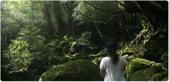 屋久島・白谷雲水峡、ひとり旅のツアー風景