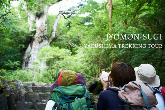 樹齢7,200年の巨樹と出逢うトレッキングの旅を楽しもう、縄文杉日帰りガイドツアー。今年の夏休み(7月、8月)は、屋久島へ行こう!
