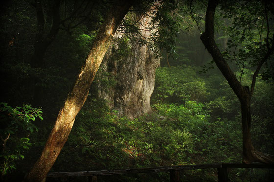 縄文杉1泊2日ツアー
